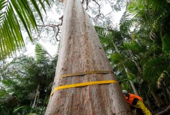 Pro Climbing Tree Service – Specialise in large tree removal